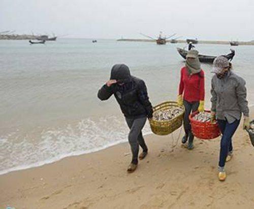 Hải sản tầng đáy trên biển của 4 tỉnh miền trung được khuyến cáo không nên sử dụng