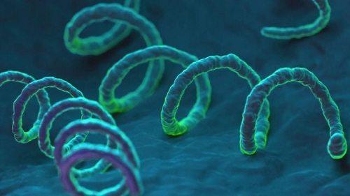 Xoắn khuẩn Treponema pallidum gây ra bệnh giang mai