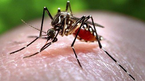 cach-phong-tranh-nhiem-virus-zika