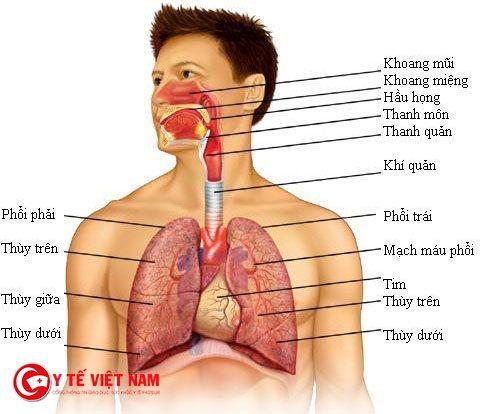 Chảy máu cam có thể làm dịch chuyển mạch vòm khẩu cái làm cho trẻ không thể thở bằng mũi