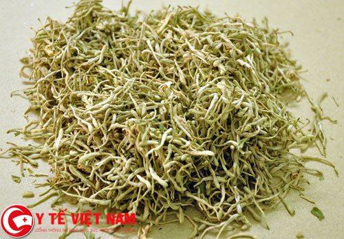 Bài thuốc nam chữa bệnh hen suyễn bằng bột lá táo và kim ngân