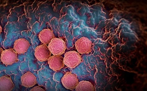 Vi rút Rubella đã xâm nhập vào cơ thể gây tổn hại sức khỏe