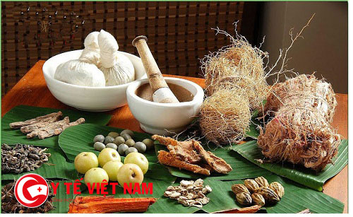 Một số loại thuốc Đông y có thể chữa bệnh viêm đường hô hấp trên