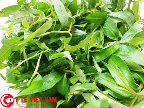 Chữa bệnh tổ đỉa bằng lá trầu không và rau răm