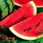 Bệnh xơ vữa động vật nên ăn dưa hấu.