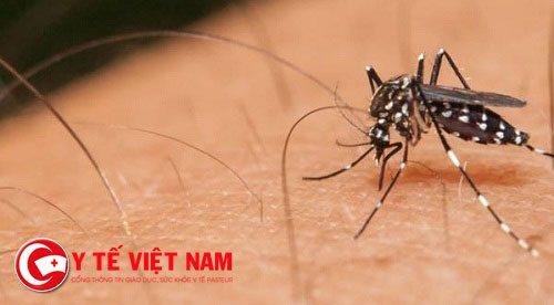 Không ngừng gia tăng số người nhiễm virus Zika mỗi ngày ở Sài Gòn