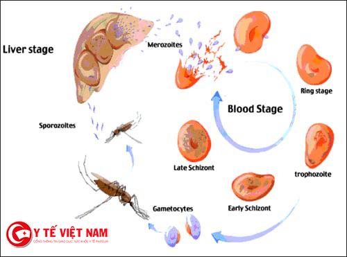 Cách phòng ngừa bệnh viêm não Nhật Bản