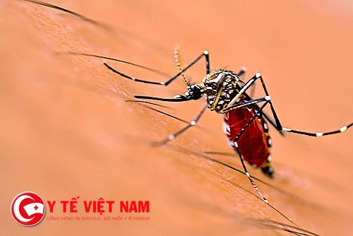 """Virus Zika tiếp tục """"nóng"""" lại Sài Gòn"""