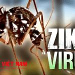 phong-ngua-virus-Zika