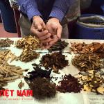Thuốc Đông y chữa bệnh ung thư tuyến giáp