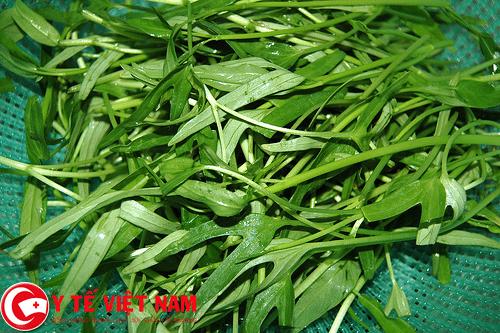 Rau muống là loại rau phổ biến trong bữa ăn hàng ngày của mỗi gia đình Việt