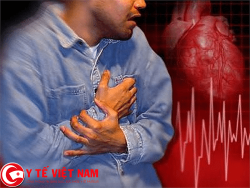Cây khổ sâm thần dược chữa bệnh rối loạn nhịp tim