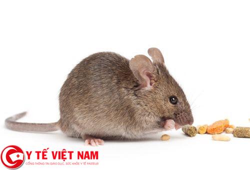 nguyên nhân gây bệnh dịch hạch từ chuột