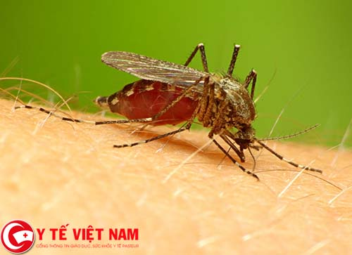 Bệnh sốt rét do bị muỗi đốt