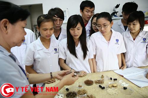 giáo viên dược làm việc tại Hà Nội
