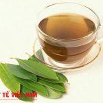 Sử dụng lá vối tươi để chữa bệnh viêm đại tràng mãn tính