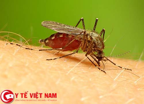 Bài thuốc chữa bệnh sốt rét hiệu quả từ vườn nhà