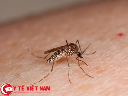 Nghĩ rằng bệnh sốt xuất huyết sẽ không lặp lại lần 2