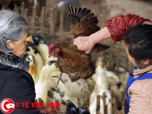 Nên có cách lựa chọn gia cầm để phòng dịch cúm A/H7N9 nguy hiểm