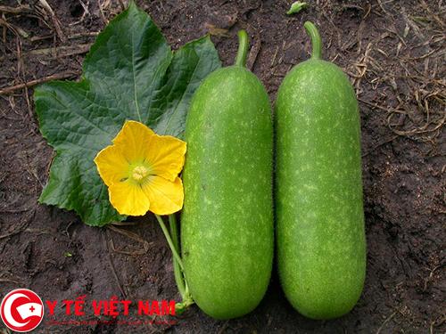 BÍ xanh thực phẩm vàng cho người bệnh gút