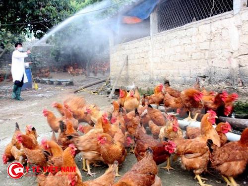 Chủ động phòng tránh dịch cúm H5N1 trên địa bàn tỉnh Nghệ An