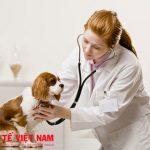 Mô tả việc làm tuyển dụng nhân viên y tế tại Đồng Nai
