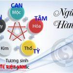 Lý luận về Học thuyết Tạng phủ trong Y học cổ truyền