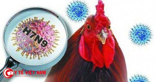 virus cúm A/H7N9
