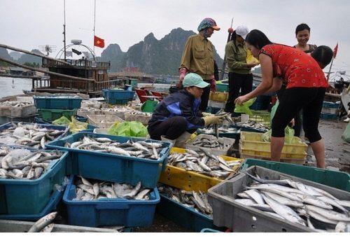 Bộ Y tế kiểm nghiệm độ an toàn của hải sản 4 tỉnh miền Trung