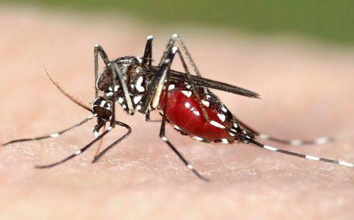 Đừng vội mừng khi Đại dịch sốt xuất huyết tại Hà Nội giảm mạnh