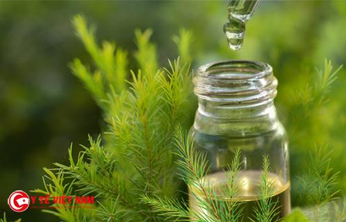 Tinh dầu tràm trà giúp trị mụn hiệu quả