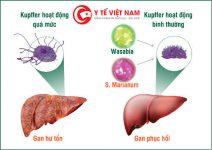 Cảnh giác với viêm gan E trong mùa mưa lũ