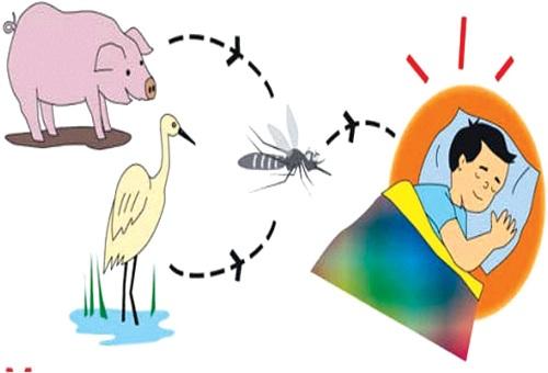 Bác sĩ cảnh báo một số bệnh nguy hiểm lây truyền từ động vật