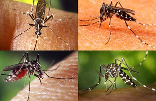 Bệnh sốt rét lây từ người sang người qua đường muỗi đốt