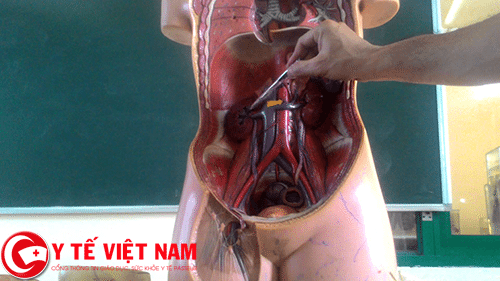 Ứng dụng công nghệ 3D vào thực hành giải phẫu cơ thể người