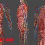 Ứng dụng công nghệ 3D vào giảng dạy y khoa