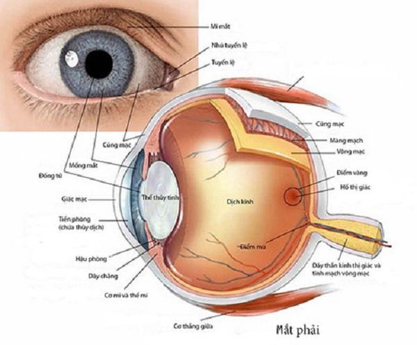 Bác sĩ chuyên khoa hướng dẫn sử dụng thuốc nhỏ mắt đúng cách