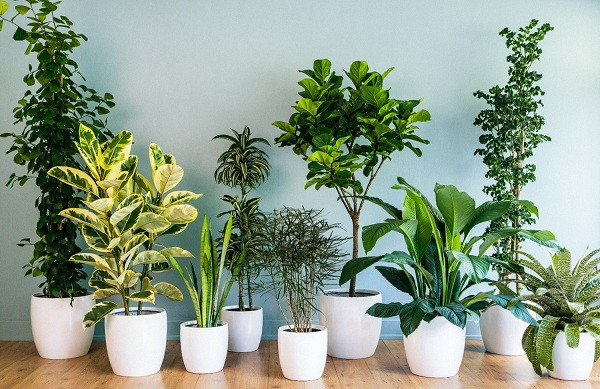 màu xanh tự nhiên của cây cối có tác dụng rất tốt giúp cho mắt được thư giãn